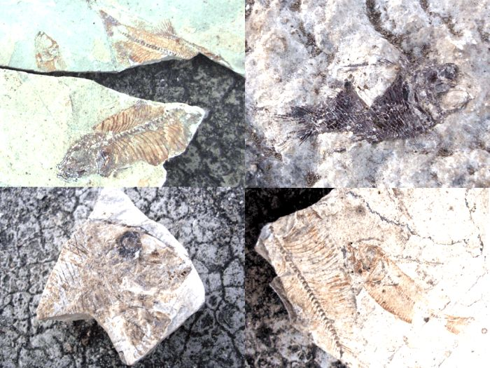 3. Primjerci fosila-min.jpg