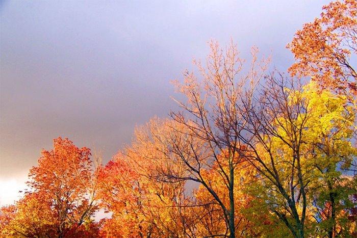 jesen kisa.jpg