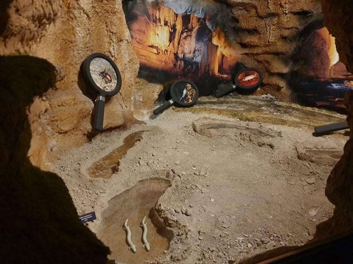 prirodnjacka postavka muzej hercegovine (1).jpg