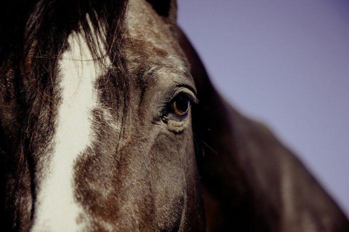Konj.jpg