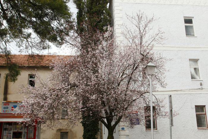 Dzanarika proljece.jpg