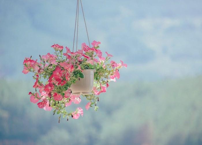 proljecno cvijece (2).jpg