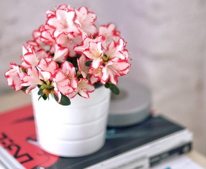 proljecno cvijece (1).jpg