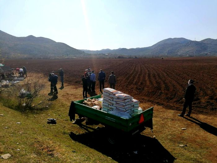 Krompir agrarni fond1.jpg