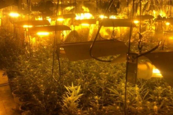 Marihuana spanija.jpg