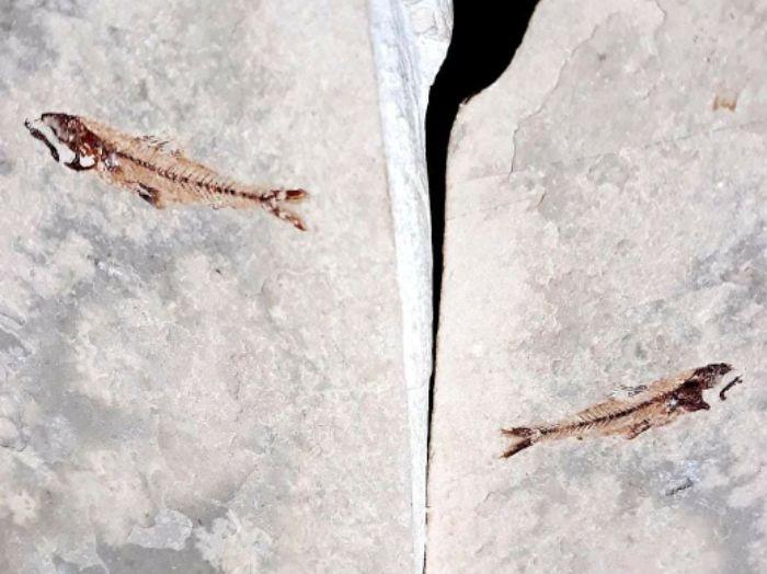 fosil strujici.jpg