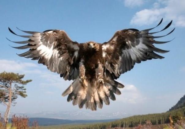 zlatni orao ponovo leti makedonija