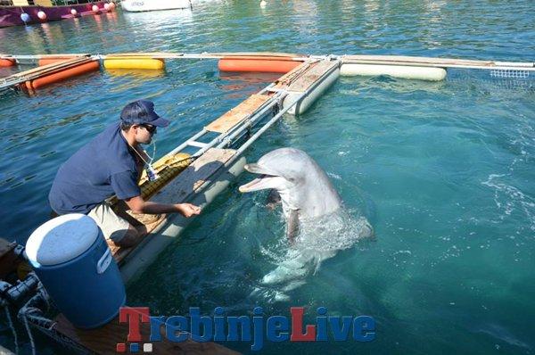 delfini dubrovnik