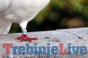 prsten golub dubrovnik