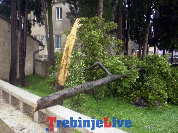 drvo trebinje spomenik braniocima trebinja