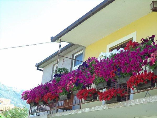 balkon dragica kukuric