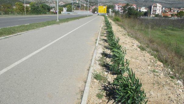 oleanderi