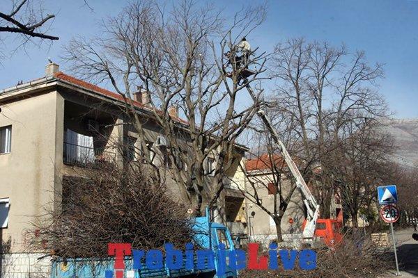 uredjenje grada orezivanje drveca