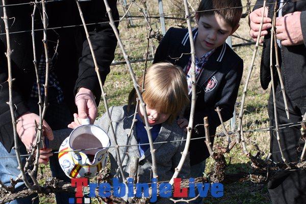 podrum vukoje carski vinogradi sveti trifun