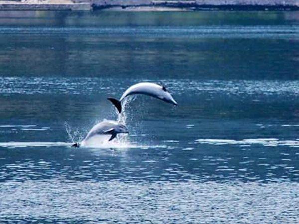 delfin u kotoru dobrota boka kotorska