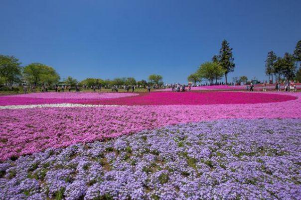 Hicudjijama Park Cicibu Japan