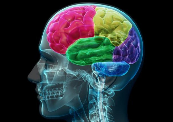 mozak inteligencija