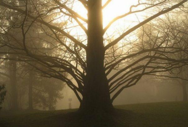 vjerovanja u drveca stari srbi