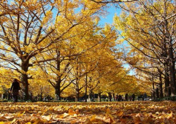 Jesen i sunce