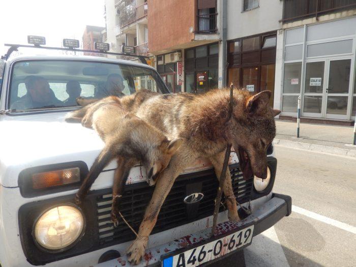 vuk i lisica trebinje