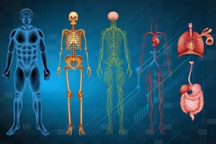 dijelovi tijela visak