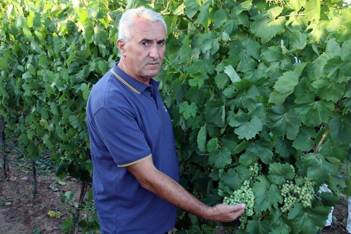 prezentacija vukoje vinogradi (1)
