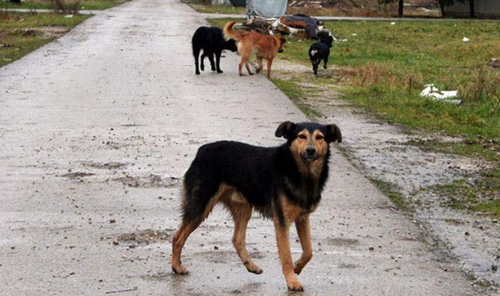 psi-lutalice-trebinje