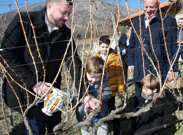 orezivanje vinove loze carski vinogradi vukoje (1)