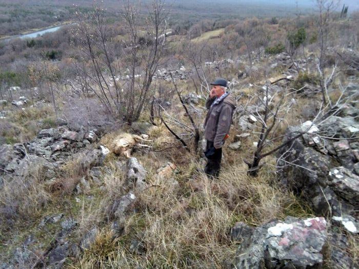 vukovi zaklali ovce
