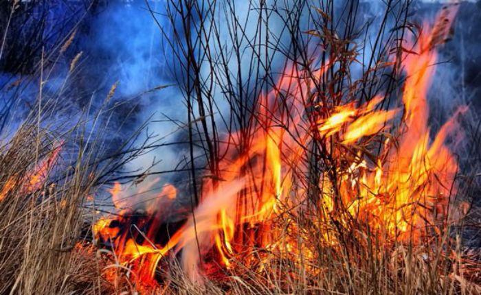 Vatra korov