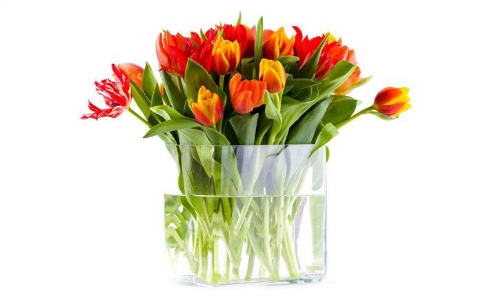 cvijece vaza