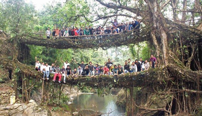 zivi mostovi u indiji