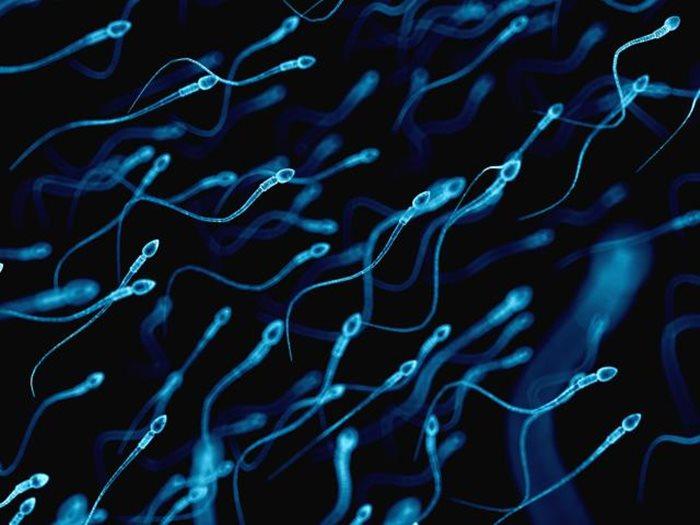 spermatozoidi