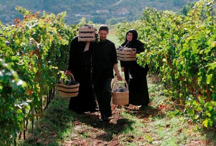manastir tvrdos vinogorje