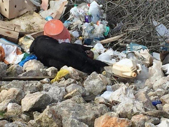 ubijeni psi ivanica (1)