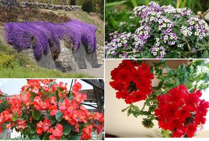 cvijece 1