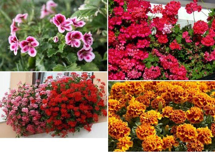 cvijece 4